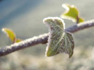 frosty marco